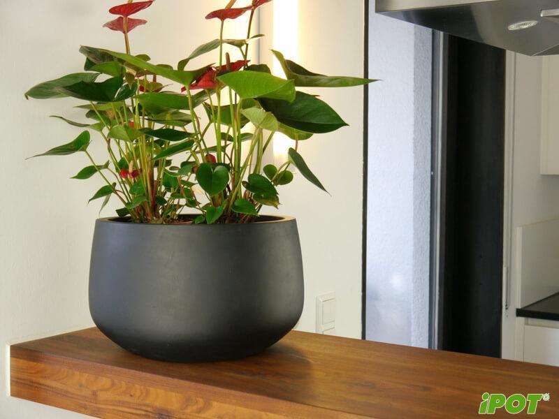 Những lí do bạn nên chọn iPOT khi mua chậu Composite tại Hà Nội?