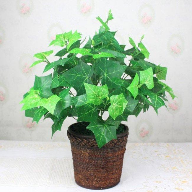 Tổng hợp những loại cây làm sạch không khí trong nhà