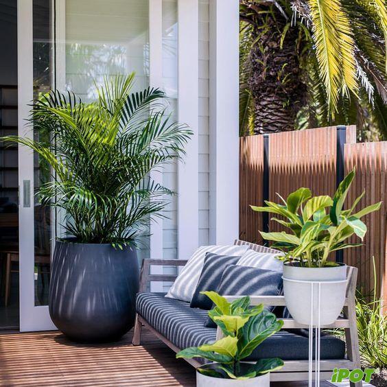 Những vị trí nên đặt cây cảnh trong nhà?