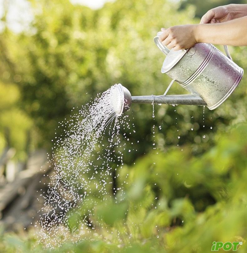 Chăm sóc chậu cây cảnh vào mùa hè như thế nào?