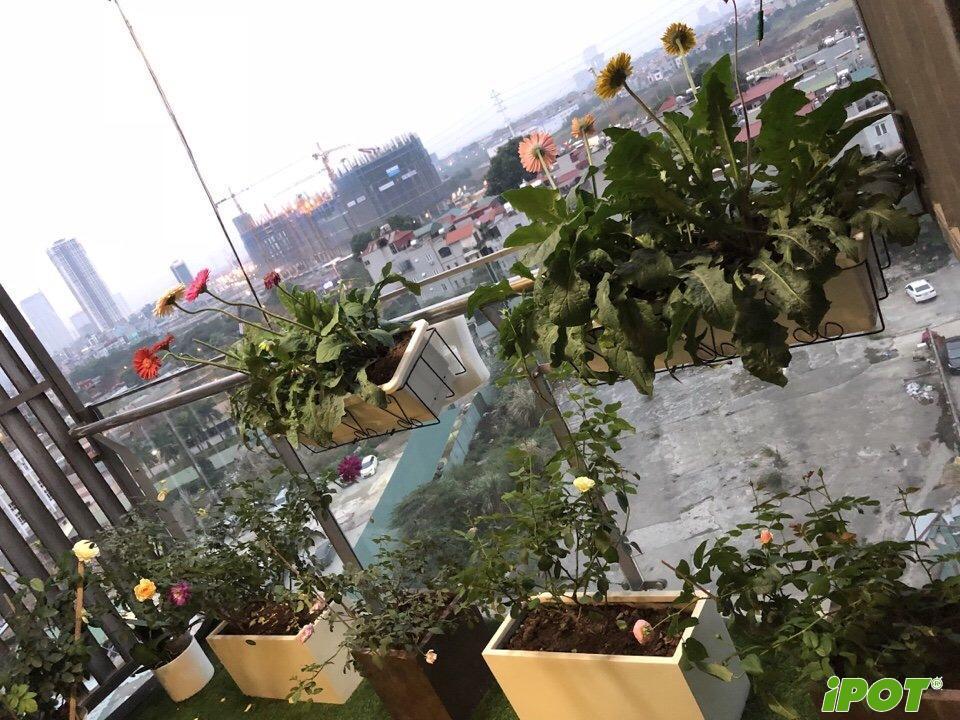 Chậu cây cảnh đẹp tại Hà Nội