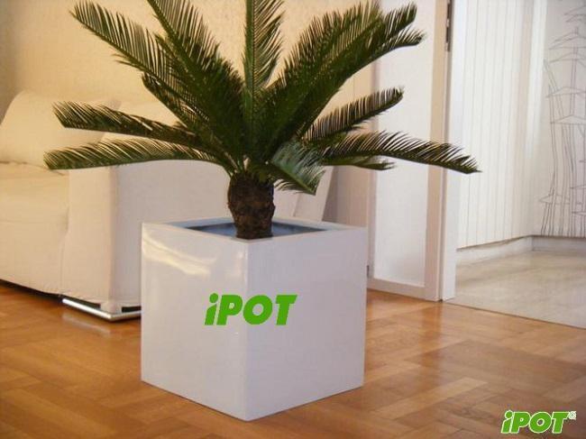 Tại sao nên chọn chậu composite để trồng cây cảnh không?