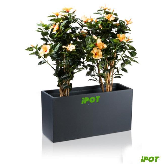 iPOT – Địa chỉ bán chậu composite tại Hà Nội uy tín số 1 hiện nay