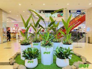 Lợi ích khi kết hợp chậu composite đẹp tại Hà Nội với việc trồng cây cảnh