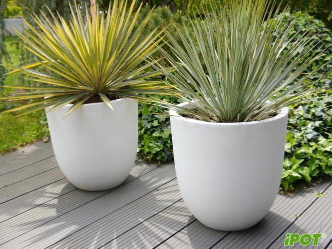 Lợi ích tuyệt vời khi trồng cây với chậu Composite nhất định bạn phải biết