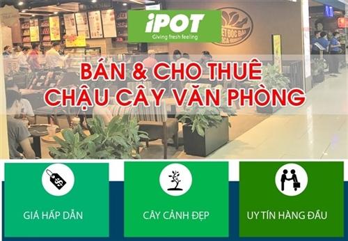 iPOT ra mắt dịch vụ cho thuê chậu cây văn phòng