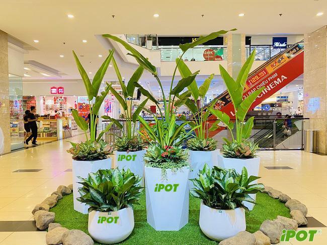 iPOT- lựa chọn hàng đầu khi mua chậu Composite tại Hà Nội?